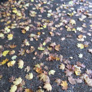 Blätter im Herbst Leipzig