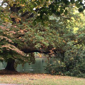 Herbst im Clara Park Leipzig