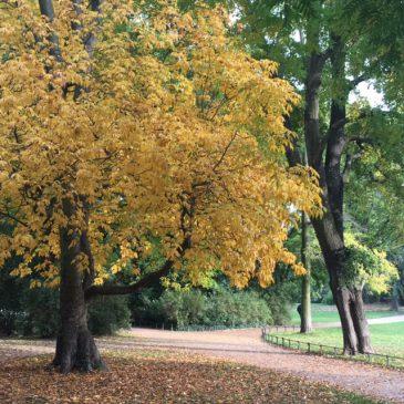 Gehmeditation durch den herbstlichen Park
